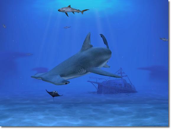 sharks القرش المفترس على شاشتك سكرين سيرفر رائع لللاسماك